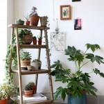Ways to decorate plants indoors