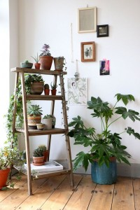 Ladder effect