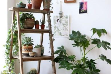 Ways to decorate plants indoors