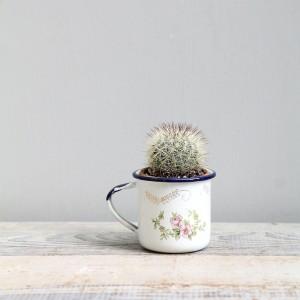 Cactus Teacup