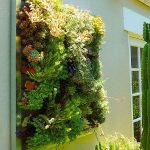 Indoor Green Walls by Living Green Walls