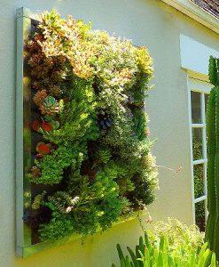 Indoor Green Walls