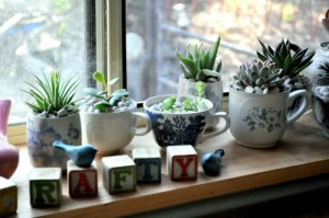 Plants for windows