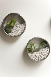 Mini air plant