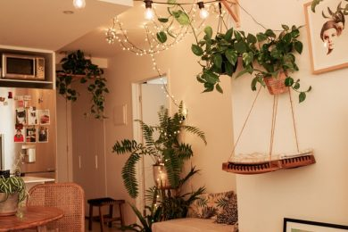 Benefits of Keeping Houseplants