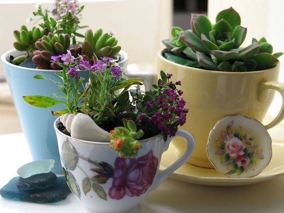 Teacup Planters Fashion In India Threads