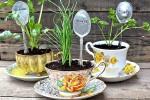 Tea pot garden