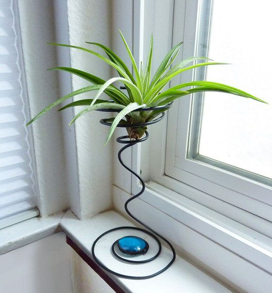 Air plant Decoration