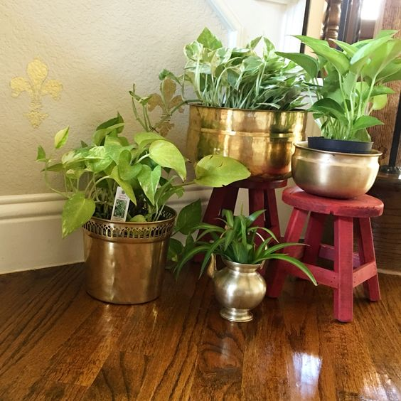 Decorating plants indoor the indian way threads - Decorate home with plants ...