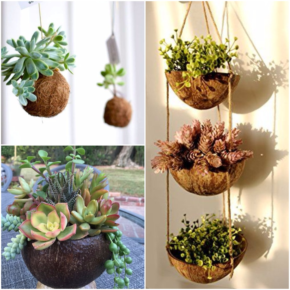 Coconut Shell Planters