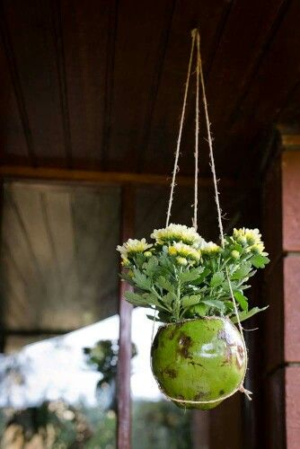 Coconut Shell planter pot