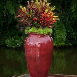 Decorating Home With Crotons