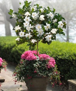 Fragrannt Plants