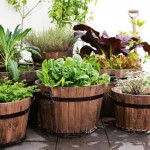4 Must Have Herbs for Beginning With A Kitchen Garden