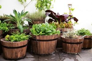 Kitchen garden Herbs for beginners