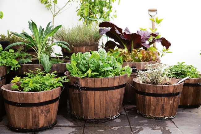 Kitchen garden Herbs for beginners