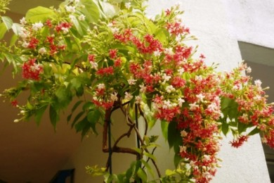 Fragrant Plants For Indian Summers