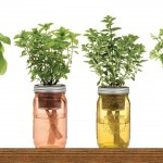 Herbs That Can Be ReGrown In Water Again And Again