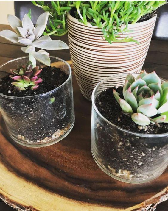 Reuse glass jars to grow plants