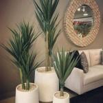 5 Indoor Plants For Beginners