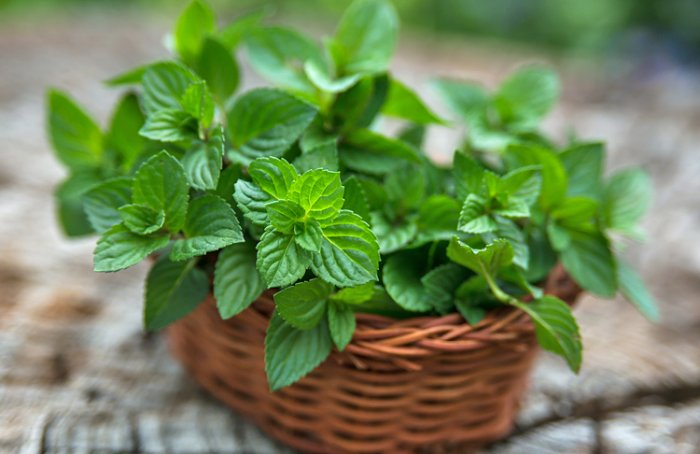 Mint as a natural toner for skin