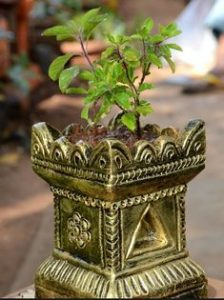 Tulsi plant, Diwali decoration