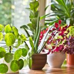 9 Steps To Purify Indoor Air Naturally