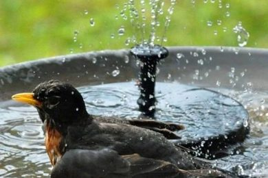 Attract Birds To Your Garden By Helping Them Beat The heat With These Simple Bird Bath Ideas