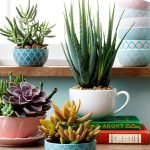 Decorate Home With Aloe Vera As An Indoor Plant