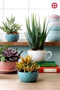 Home decor with Aloe Vera