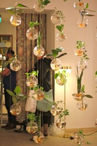 Use glass balls for growing plants indoor