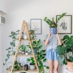 Indoor Plant Stands And Accessories To Watch Out For