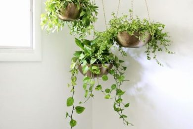 Use hanging pots for growing plants indoor
