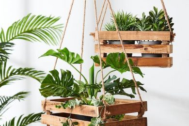 Use wooden pallet for growing plants indoor