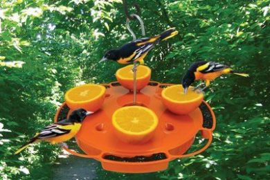 how to attract birds in your garden