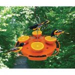 Attract Fruit Loving Birds In Your Garden