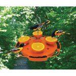 Attract Fruit Loving Birds In Your Garden