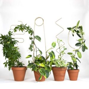 Topiary miniature plants for home garden