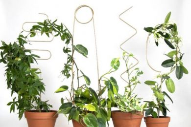 6 Topiary Miniatures Which You Can Create At Home