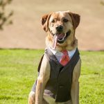 5 Dog Outfits For Weddings