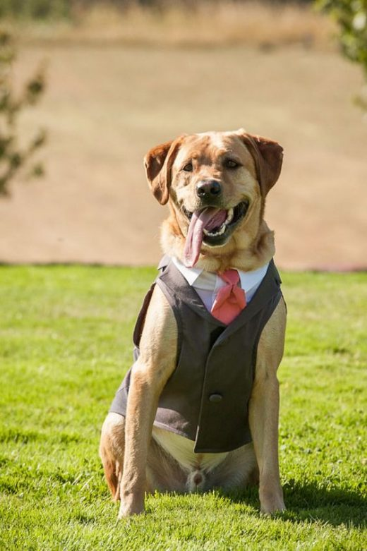 Dog outfits for weddings